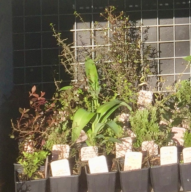Plant Stall now OPEN
